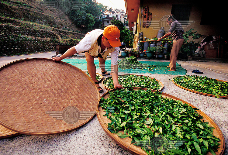 A man dries tea leaves in the traditional way in New Taipei City, the vast, hilly area surrounding Taipei, formerly known as Taipei County.