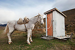 Horse waiting at the outhouse, Patagonia, South America