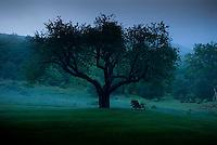 Single apple tree with bench beneath it