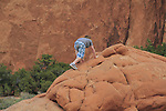 Boy scrambling up slickrock in the  Devil's Garden, Arches National Park Utah, USA. .  John offers private photo tours in Arches National Park and throughout Utah and Colorado. Year-round.