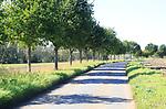 Rural landscape curving road, line of trees, blue sky, grass verge, Brandeston, Suffolk, England, UK