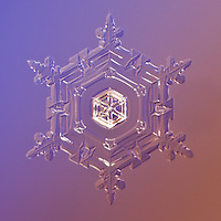 Snowflake Vega - Stellar Plate