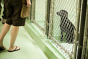 Genevieve waits for an owner to take her home from the Animal Pretection Society of Durham.