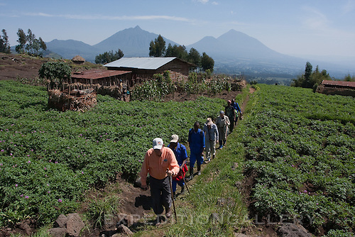 Trekking through rural farmlands on approach to Volcanoes National Park (Parc National des Volcans), Rwanda. [NO MODEL RELEASE]