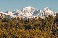 Sunset light of Mount Tasman and Aoraki Mount Cook viewed over native forest, Westland Tai Poutini National Park, West Coast, UNESCO World Heritage Area, New Zealand, NZ