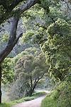 Waddell Creek in winter