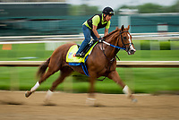 LOUISVILLE, KY - APRIL 30: Kentucky Derby contender, Hence, gallops at Churchill Downs on April 30, 2017 in Louisville, Kentucky. (Photo by Alex Evers/Eclipse Sportswire/Getty Images)