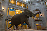 Washington D. C., museum, elephant, not released