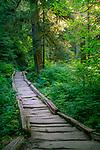 8.19.17 - The Path...