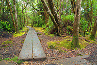 A hiker's view of the boardwalk of the Pihea Trail runs ahead at the crossroads of the Alaka'i Swamp Trail and the Pihea Trail in Koke'e State Park, Kaua'i.