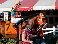 Somelikeithotbrown  in the post parade as Opry (no. 8) wins the With Anticipation  Stakes (Grade 3), Aug. 29, 2018 at the Saratoga Race Course, Saratoga Springs, NY.  Ridden by  Javier Castellano, and trained by Todd Pletcher, Opry finished 1 1/2 lengths in front of Somelikeithotbrown (No. 7).  (Bruce Dudek/Eclipse Sportswire)