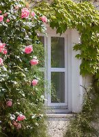 Deutschland, Bayern, Niederbayern, Naturpark Bayerischer Wald, Fenster umrahmt von wildem Wein und Rosenbusch | Germany, Bavaria, Lower-Bavaria, Nature Park Bavarian Forest, window with rose bush, idyllic