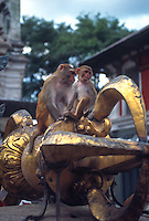 Monkeys at Swayambunath stupa.