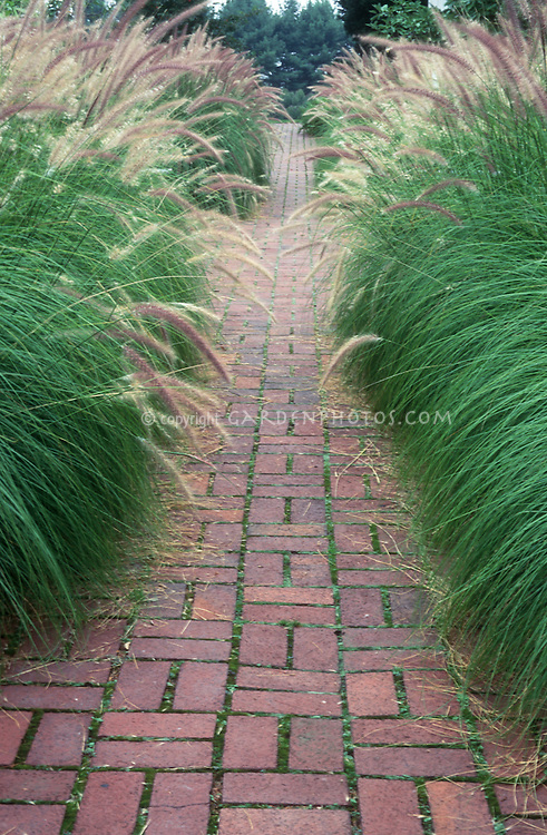 Ornamental grasses lining both sides of brick walkway in garden, hedge, Pennisetum alopecuroides mirrored on each side to form an allee hedging