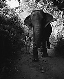 SRI LANKA, Asia, view of an elephant and his owner in Dambulla.