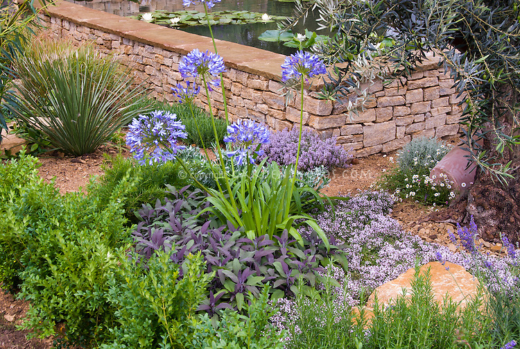 Water Garden With Waterlilies, Waterfall, Lavender Herb In Dry  Mediterranean Garden, Agapanthus,
