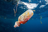 pollution, discarded plastic bottle, floating near shore in Raja Ampat, West Papua, Indonesia, Indo-Pacific Ocean