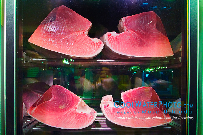 blocks of large tunas, Thunnus sp., in refrigerator for sale at wholesale shop, Tsukiji Fish Market or Tokyo Metropolitan Central Wholesale Market, the world's largest fish market, hadling over 2,500 tons and over 400 different kind of fresh sea food per day