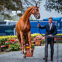 GBR-Richard Coney presents Horatio DN during the First Horse Inspection for the Donagh Hickey Motors CCI2*-L. 2019 IRL-Millstreet International Horse Trials. Glens Gren Arena. Millstreet. Co. Cork. Ireland. Wednesday 21 August. Copyright Photo: Libby Law Photography