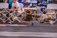 2 Fast Fur U Beach Party Flyball 7 18-19 2015