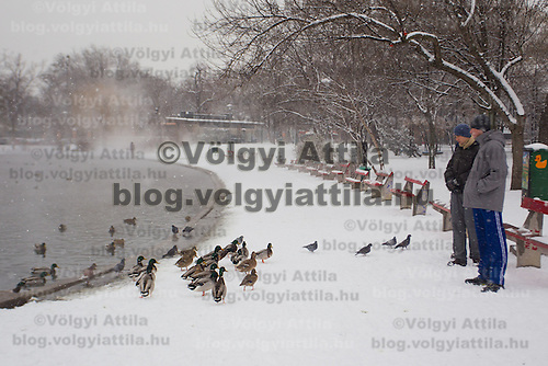 Pedestrians feed wild birds at a lake filled with thermal water in the snow covered City Park in Budapest, Hungary on February 17, 2012. ATTILA VOLGYI