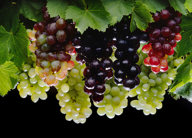 A variety of TABLE GRAPES.