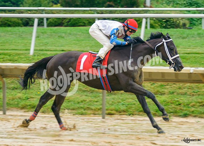 Night Madam winning at Delaware Park on 9/19/16