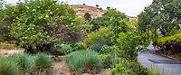No summer water demonstration garden across street from Judy Adler Garden, Walnut Creek, California