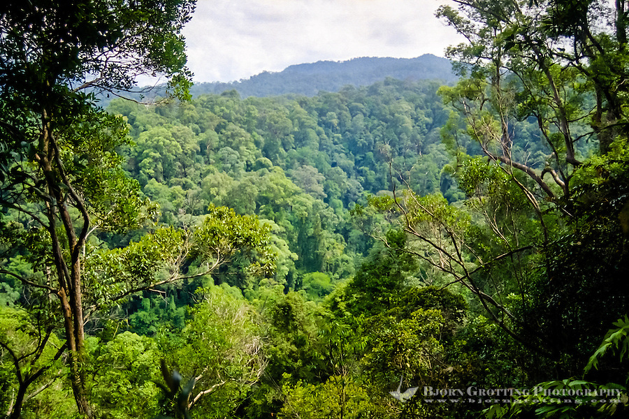 Indonesia, Sumatra. Bukit Lawang. Gunung Leuser nasjonalpark. Typical orangutan territory, tropical rainforest.