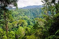 Indonesia, Sumatra. Bukit Lawang. Gunung Leuser nasjonalpark. Typical orangutan territory, tropical rainforest.