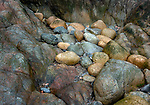 Acadia National Park, Maine: Detail of worn boulders, rocks in the crevices of Hunter's Beach