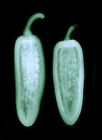 X-Ray of a two jalapeno (Capsicum annuum).  The  jalapeño rates between 2,500 and 10,000 Scoville units in heat.  This pepper originated in South America.