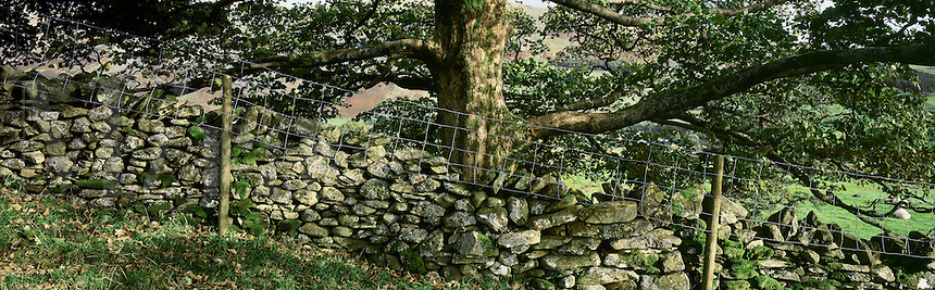 A rock wall fences off a pasture in the Lakes District in England.