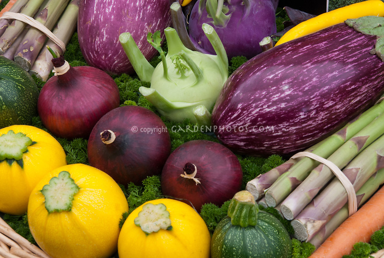Squash, Eggplant Aubergine, Asparagus, Kohlrabi, Red Onions, Zucchini, carrot, Harvested Vegetables crops with parsley