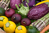 Squash, Eggplant, Asparagus, Kohlrabi, Onion, Zucchini, carrot Harvested Vegetables