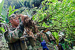 A Colombian soldiers holds up a coca plant during a coca plant eradication program at the Antioquia mountains In Colombia so far this year have been eradicated 900 hectares in the country, mainly in rural areas, there are about 2,500 men engaged in this work. According to the Presidential Program for Comprehensive Action against Antipersonnel Mines, between 1990 and January 31, 2012, have been affected by landmines l9.642 people, of these, 674 were injured in eradication. Medellín, July 3 of 2012. Photo by Fredy Amariles/ VIEWpress.