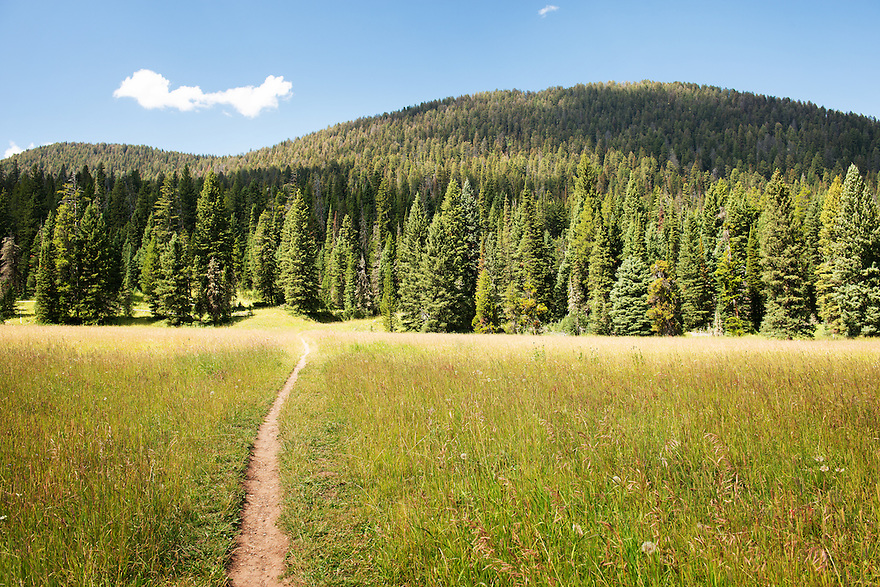 The History Rock trail passes through meadow and pine forest in Hyalite Canyon south of Bozeman.