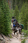 wrangler, trail ride, horseback, pack horses, forest, Wild Basin, Rocky Mountain National Park, Colorado, USA