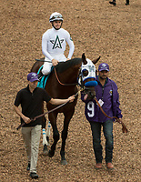 DEL MAR, CA - NOVEMBER 03: Battle of Midway #9, ridden by Flavien Prat, walks in the paddock before the Breeders' Cup Las Vegas Dirt Mile on Day 1 of the 2017 Breeders' Cup World Championships at Del Mar Thoroughbred Club on November 3, 2017 in Del Mar, California. (Photo by Casey Phillips/Eclipse Sportswire/Breeders Cup)