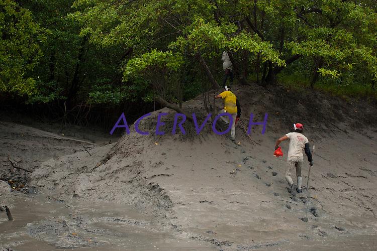 Entre ra&iacute;zes a&eacute;reas, enfiados na lama, pescadores artesanais capturam caranguejos nos manguezais do litoral, na foz do rio Amazonas. Os pescadores conseguem capturar cerca de 150 caranguejos por dia, comercializando o crust&aacute;ceo a U$11 o cesto com 100 unidades.<br /> Bragan&ccedil;a - Par&aacute; - Brasil <br /> Foto: Paulo Santos <br /> 16/02/2011