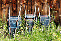 Old wheelbarrows sit in tall weeds against weathered barn wall.