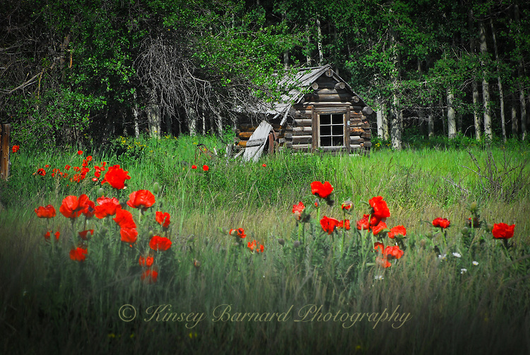 &quot;POLEBRIDGE POPPIES&quot;<br />