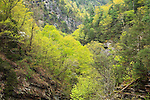 Spring view down Tallulah Gorge