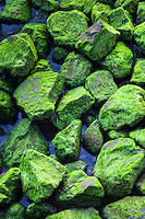 Moss.  Soft green moss.  It clings to and coats the large rocks along the shore at the San Leandro Marina on San Francisco Bay.