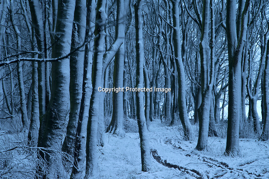 14/01/16<br /> <br /> Snowfall clings to woodland before dawn near Biggin in the Derbyshire Peak District.<br /> <br /> All Rights Reserved: F Stop Press Ltd. +44(0)1335 418365   +44 (0)7765 242650 www.fstoppress.com