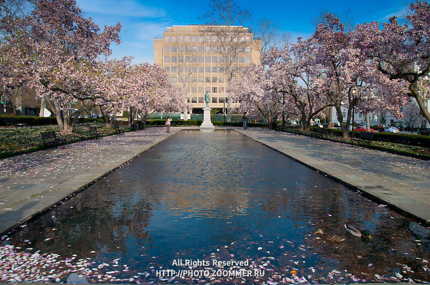 Rawlins Park in Washington DC in spring cherry blossoms