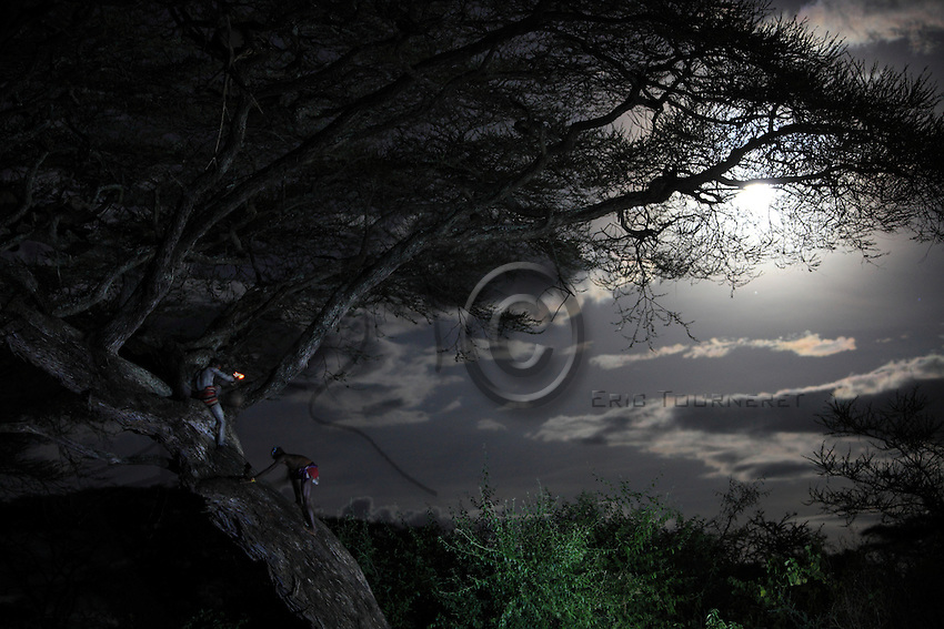 In the land of the Bana tribe, the harvest of the hive trees takes place at nightfall in the moonlight. ///Dans le pays de la tribu Bana, les récoltent des arbres à ruche se déroulent à la tombé de la nuit à la lumière de lune.