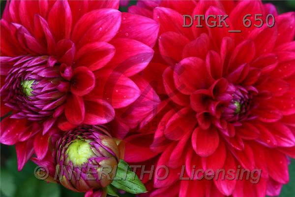 Gisela, FLOWERS, photos(DTGK650,#F#) Blumen, flores, retrato