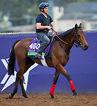 DEL MAR, CA - NOVEMBER 02: Karar, owned by Al Shaqab Racing and trained by Francis-Henri Graffard, exercises in preparation for Breeders' Cup Mile at Del Mar Thoroughbred Club on November 2, 2017 in Del Mar, California. (Photo by Kazushi Ishida/Eclipse Sportswire/Breeders Cup)