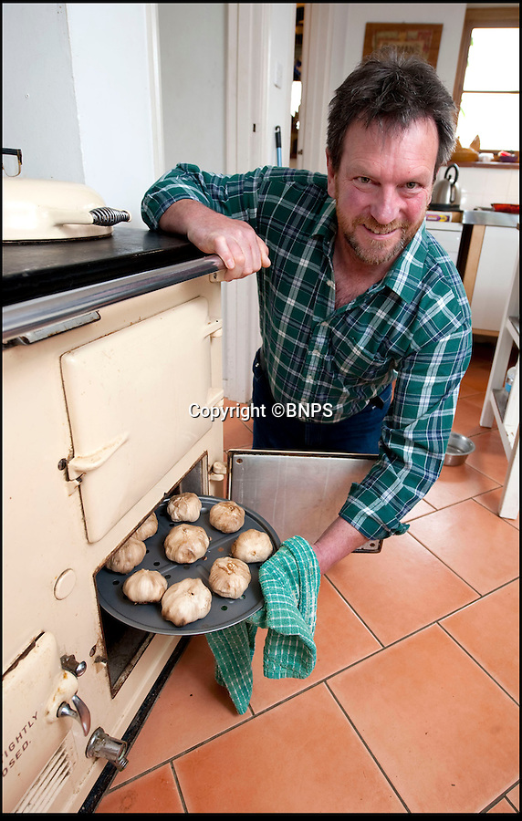 Bmth News & Pictures 01202 558833<br /> Pic: PhilYeomans/BNPS<br /> <br /> Black gold...Mark started experimenting with his kitchen Aga.<br /> <br /> A British farmer has launched this year's must-have food product after stumbling across a 4,000-year-old Korean recipe on the internet.<br /> <br /> And now the Dorset farmer is hoping to become Britain's first Garlic Millionaire as top chefs inundate him with orders for the unique product.<br /> <br /> His top secret recipe includes slow cooking the pungent bulbs for 40 days to change their colour, texture and taste.<br /> <br /> Mark Botwright wanted to find a way of preserving some of the 900,000 bulbs of garlic grown on his farm so they could be eaten all year round.<br /> <br /> The answer came when he chanced upon an ancient Korean recipe for 'black garlic', a way of preserving garlic bulbs using exposing them to heat and moisture for more than a month.<br /> <br /> Mark spent 18 months perfecting the recipe to transform regular garlic bulbs into sweety, sticky black garlic, said to have the texture of dried apricots and the taste of balsamic vinegar.<br /> <br /> He even built his own special heating room at his 13-acre farm in Bridport, Dorset, so that he could ramp up production to 2,500 bulbs every 40 days.<br /> <br /> The product has been such a hit he now supplies it to some of the best restaurants in the country including The Ritz and The Ivy.<br /> <br /> And it has been given the thumbs up by a host of top chefs including Nigella Lawson, Mark Hix and Yottam Ottelenghi.<br /> <br /> One bulb of black garlic costs 3.50 pounds and has a shelf life of over a year.